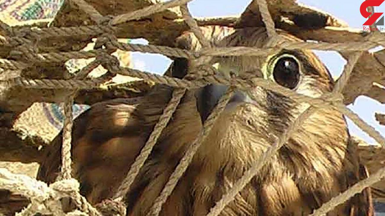 دستگیری شکارچیان پرندگان کمیاب در نایین