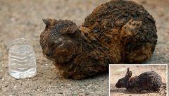 دردناک ترین تصاویر از حیات وحش سوخته کالیفرنیا