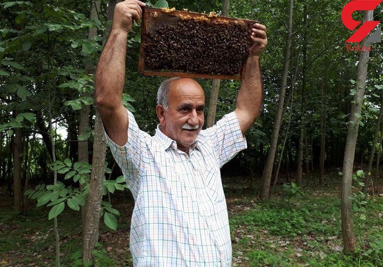 مرد گیلانی که زنبورها او را نیش نمیزنند + تصاویر