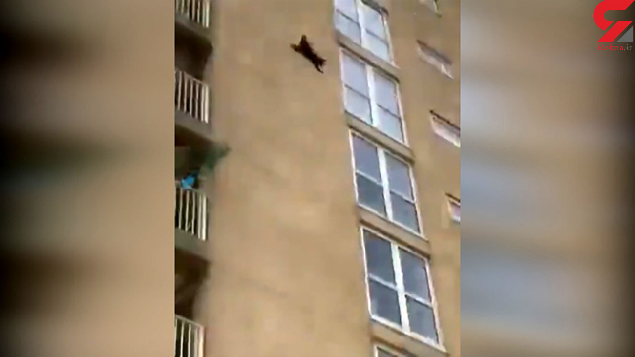 گربه پرنده روی دیوار ساختمان! + فیلم