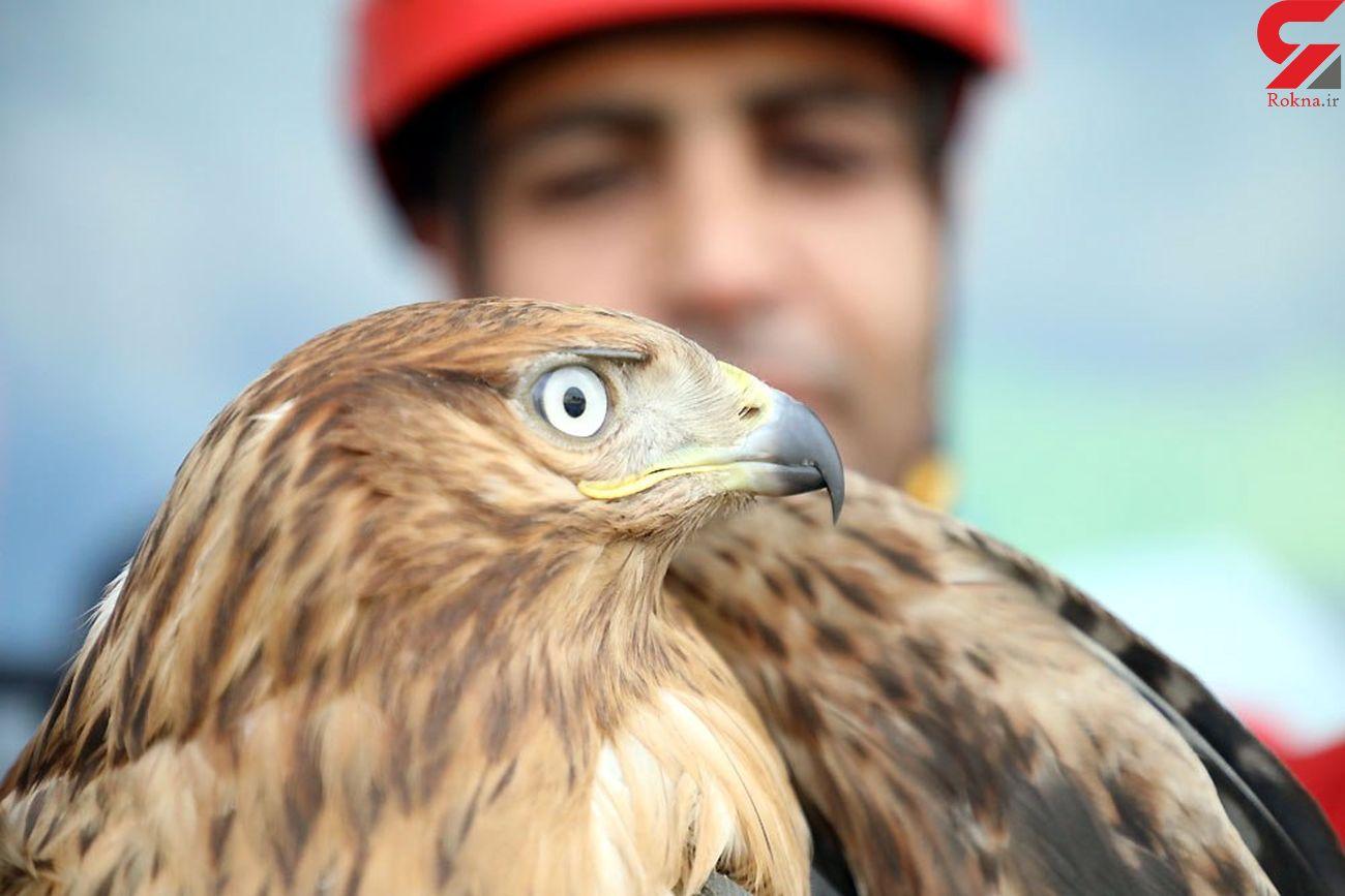 وحشت از عقاب زیبا و سرگردان در یک محله مشهد + عکس