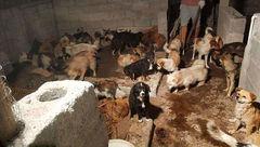 وحشت در داخل کشتارگاه سگها  / چینی ها هنوز سگ می خورند + عکس های تکاندهنده