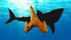 کشف دندان یک کوسه با قدمت 20 میلیون سال به طول یک خودرو+عکس