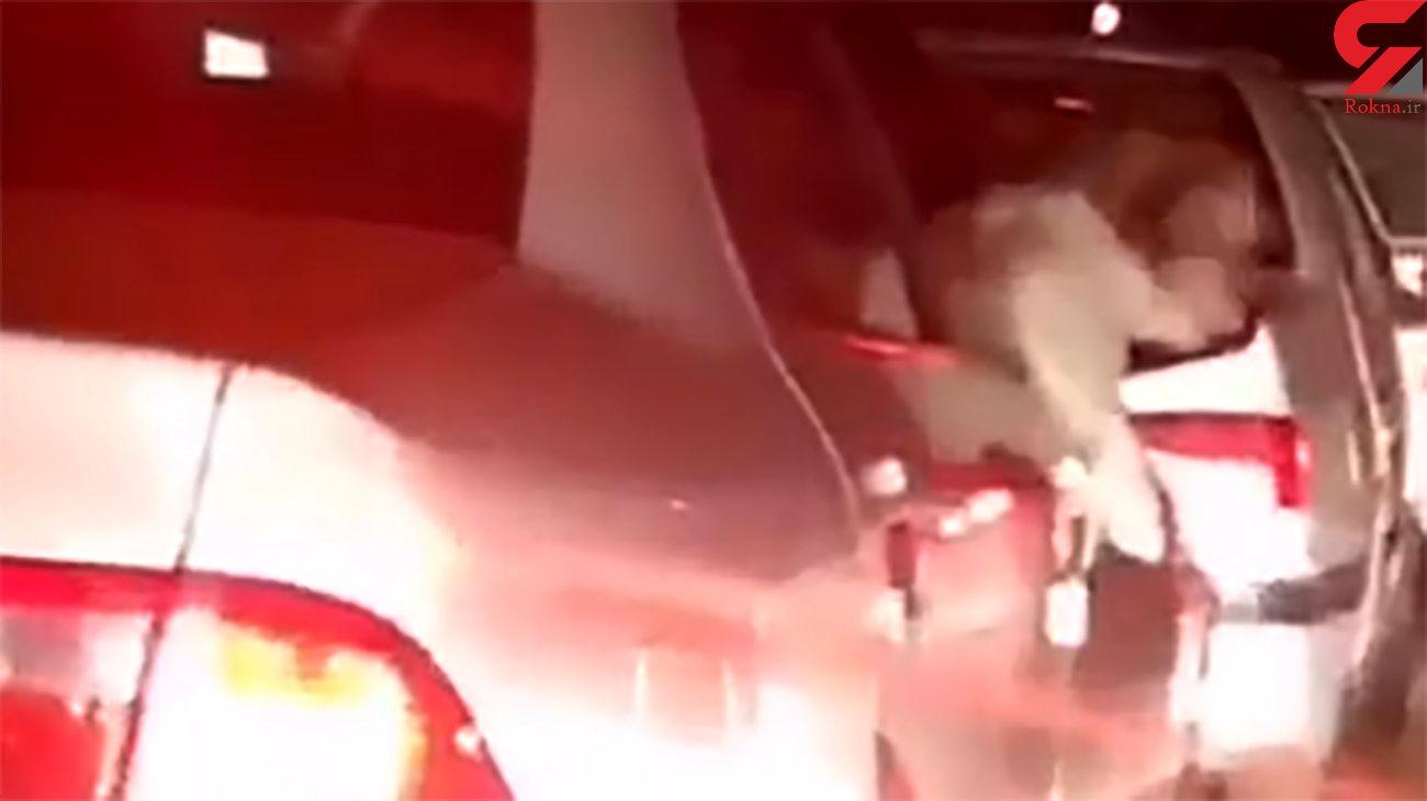 فیلم لحظه سگ گردانی باخودروی دولتی در اهواز