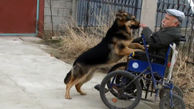 وفای عجیب یک سگ به صاحب معلولش + فیلم