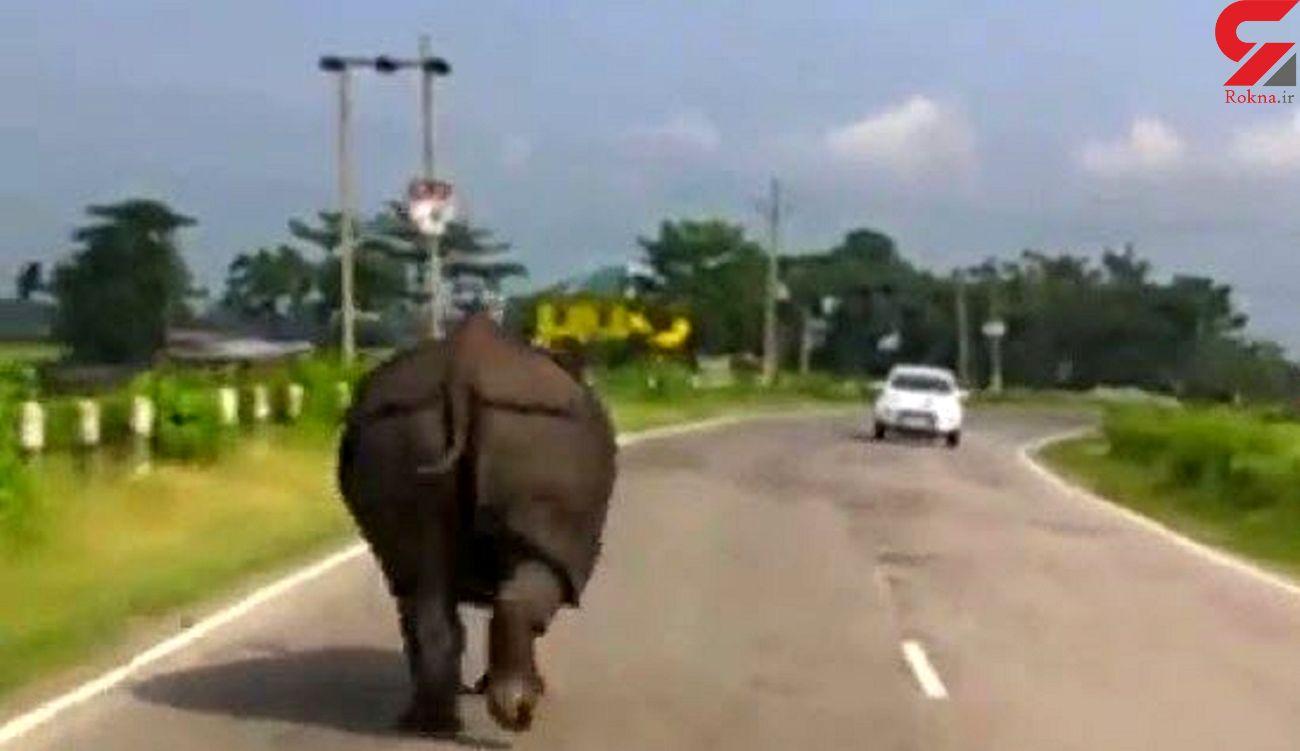 لحظه حمله گرگدن خشمگین به رانندگان ! + فیلم