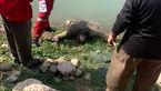 عکس جنازه های 2 جوان 12 روز بعد از گم شدن / در گیلان رخ داد