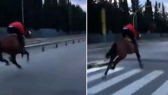 فیلم شوکه کننده از تصادف یک اسب! + فیلم