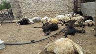 وحشت از یک گرگ داخل حیاط یک خانه در همدان / حیوان رحم نداشت