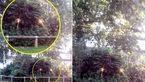 مشاهده موجودهای عجیب در جنگل های انگلیس + عکس