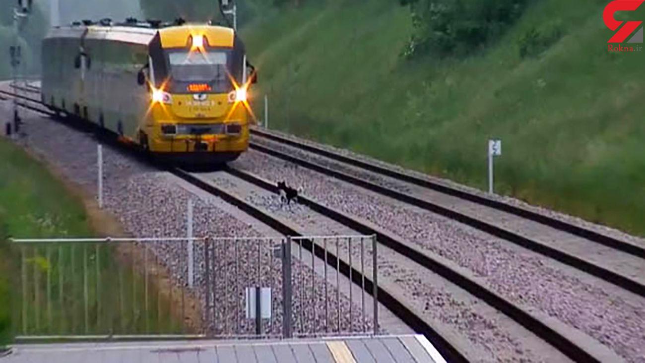 بازیگوشی سگ قطار مسافربری را مجبور به ایستادن کرد + فیلم