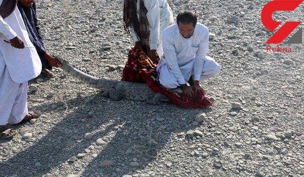 در ایران رخ داد / تمساح سرگردان همه را به وحشت انداخت! +عکس