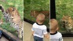 فیلم لحظه بازی مرگبار کودک نترس با پلنگ گرسنه + عکس