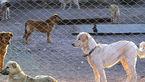 خورده شدن جسد کرونایی توسط سگ های ولگرد !