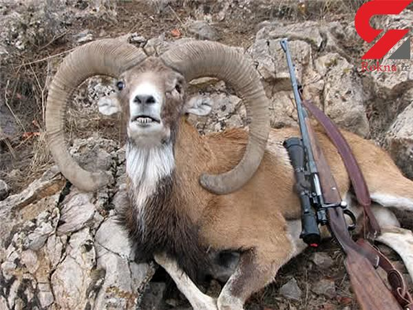 فاجعه / محیط بانان شمال تهران خودشان شکارچی قوچ وحشی بودند! + جزییات