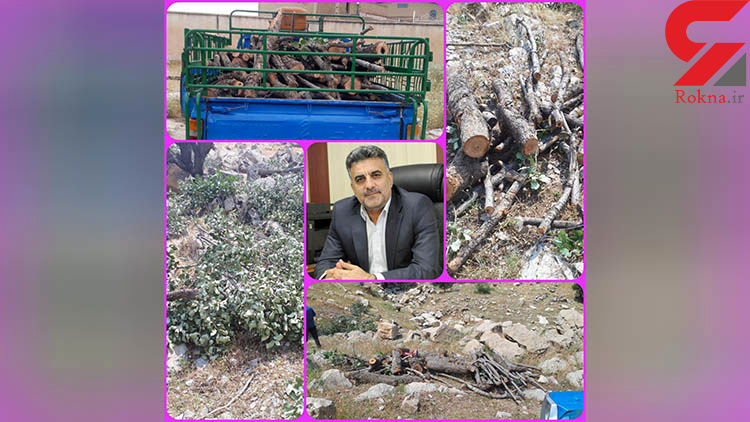قاتل جنگلهای بلوط به دام افتاد+عکس