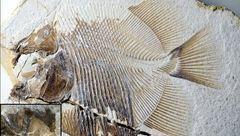 ماهی خونخوار 150 میلیون ساله کشف شد