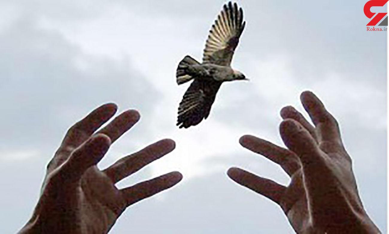 آزادی 40 زندانی از زندان های یزد