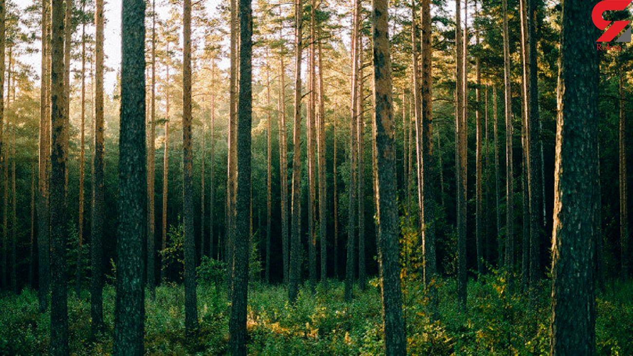 بهره گیری از ظرفیت پادگان ها برای توسعه زراعت چوب و فضای سبز