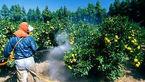 سم کشاورزی دو کودک را به کما برد