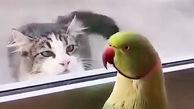 طوطی بامزه گربه گرسنه را سر کار گذاشت + فیلم