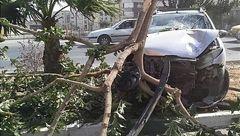 برخورد شدید پژو ۲۰۶ با درخت وسط بلوار + تصاویر