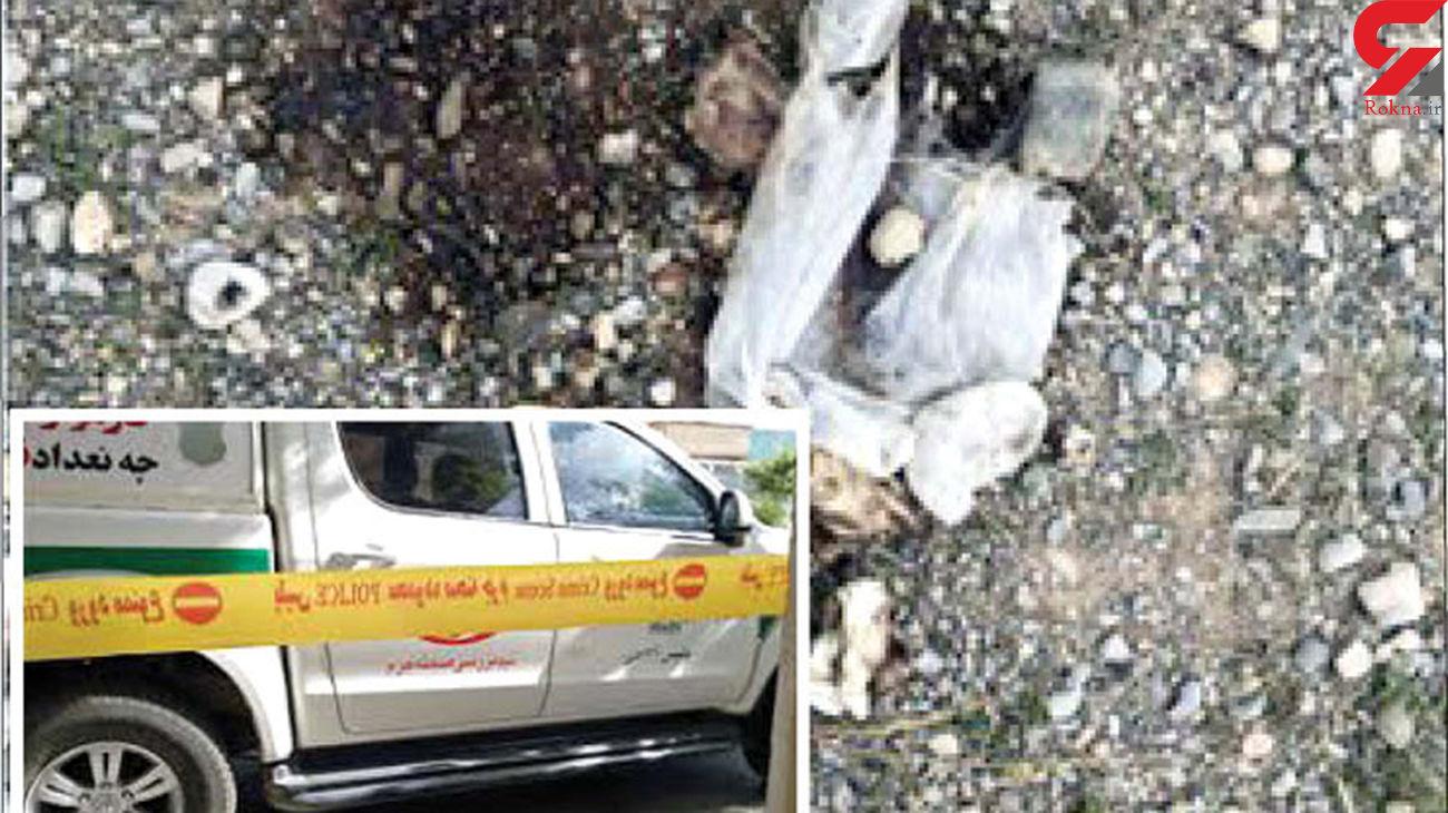 راز جمجمه انسان در دهان سگ ولگرد چه بود؟ / به پلیس مشهد کمک کنید! + عکس