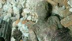 سکوت مسوولان پس از کشف جسد مومیایی در حرم عبدالعظیم