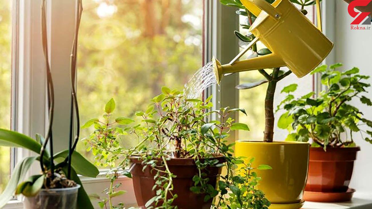 نکات مهم در رسیدگی به گیاهان در سرما