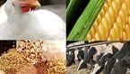 ۶۰ درصد خوراک دام در واحدهای غیر استاندارد تولید میشود