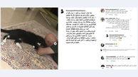 مرگ گربه بزرگمهر حسین پور و همدردی بازیگران + عکس