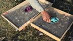 70 بال پرنده سهره طلایی حین قاچاق در اردبیل کشف شد
