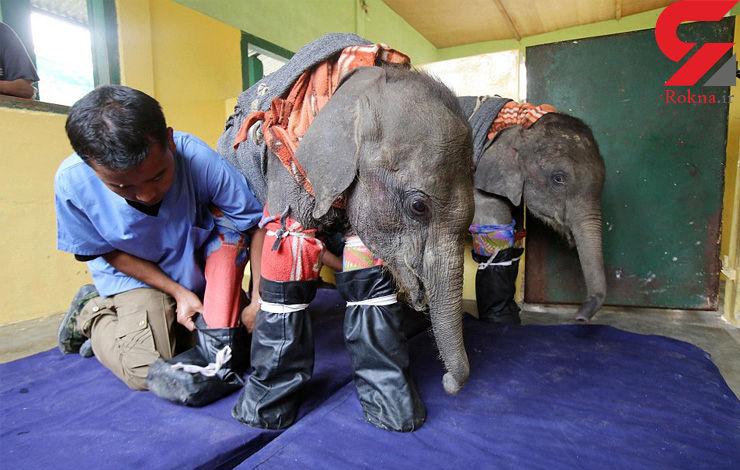 نگهداری از بچه فیلهای یتیم در هند + فیلم