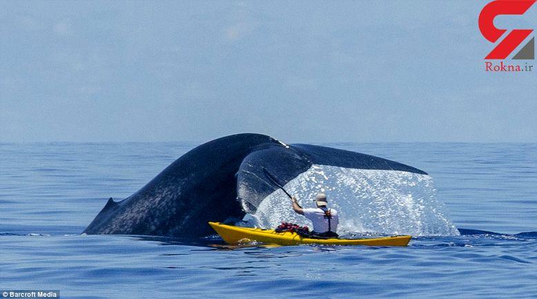کایاکسواری با نهنگ غولپیکر