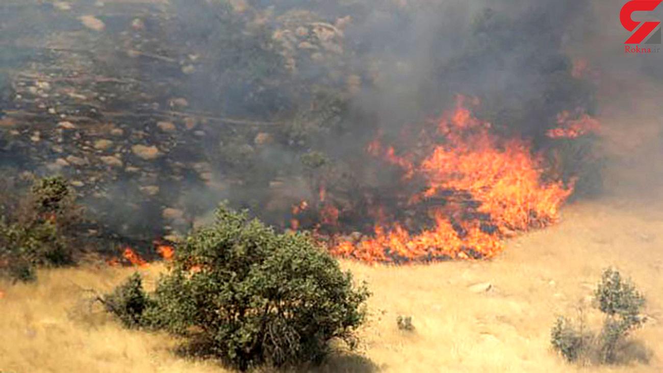 ته سیگار آتش به پا کرد / 65 درخت کاج در بیرجند سوختند