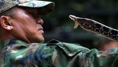 خوردن گوشت و خون مار در آموزش نظامی کشور تایلند+ عکس