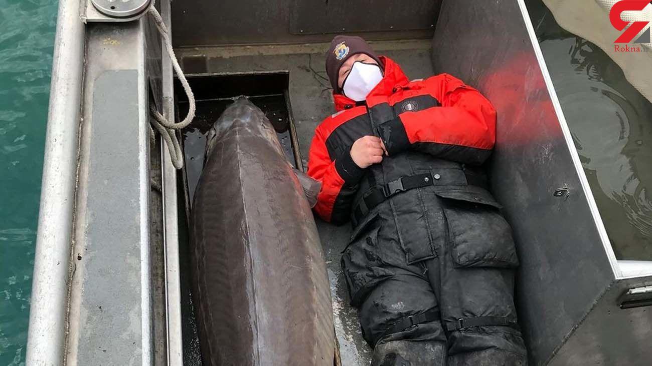 پیرترین ماهی جهان صید شد! / چند ساله است! + عکس