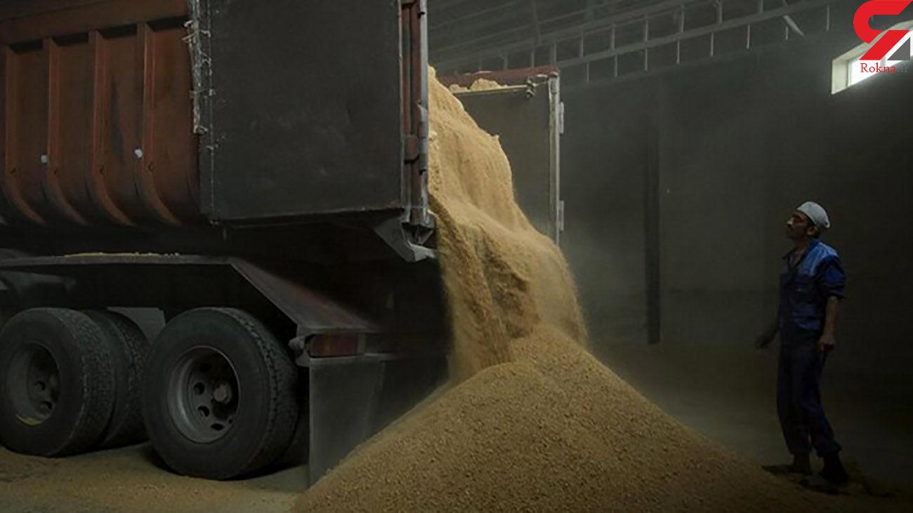خریداری ۱۶۶ هزار تن گندم مازاد بر نیاز از کشاورزان استان اردبیل