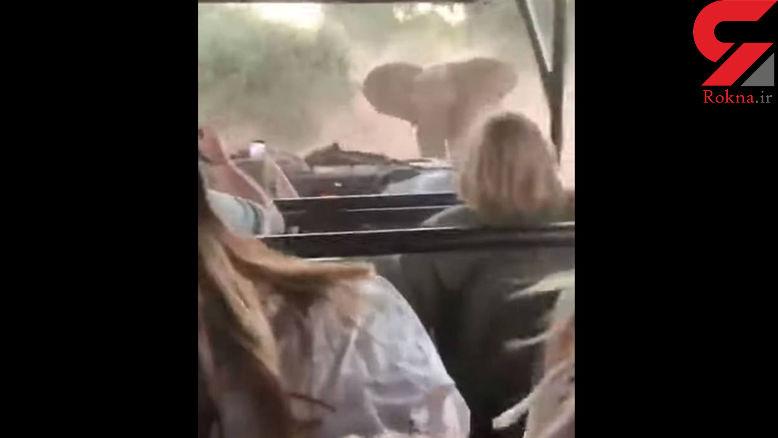 حمله ی هولناک فیل غول پیکر به توریست ها+عکس