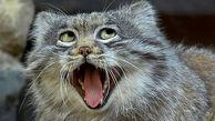 عجیب و غریب ترین تصاویر از دنیای حیوانات