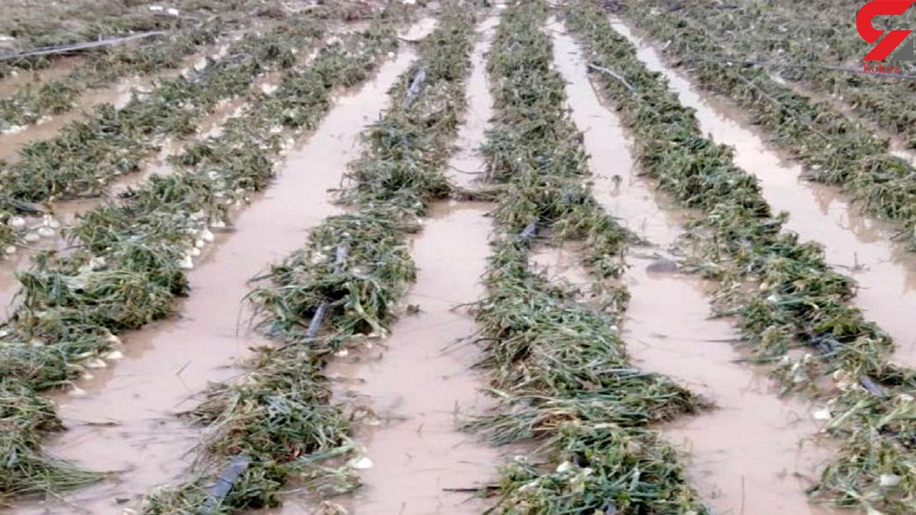 خسارت بیش از 850 میلیارد تومانی به بخش کشاورزی آذربایجان غربی