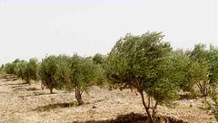 چطور مقابل خشکسالی مقاومت میکنیم