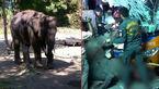تصادف مرگبار بچه فیل  فراری با اتوبوس دو طبقه