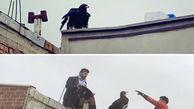 مشاهده عقاب در پشت بام یکی از خانه های مهاباد
