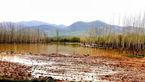 خسارت 200 میلیارد تومان سیل به کشاورزی فارس