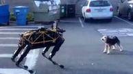 کنجکاوی سگ از دیدن یک ربات + فیلم