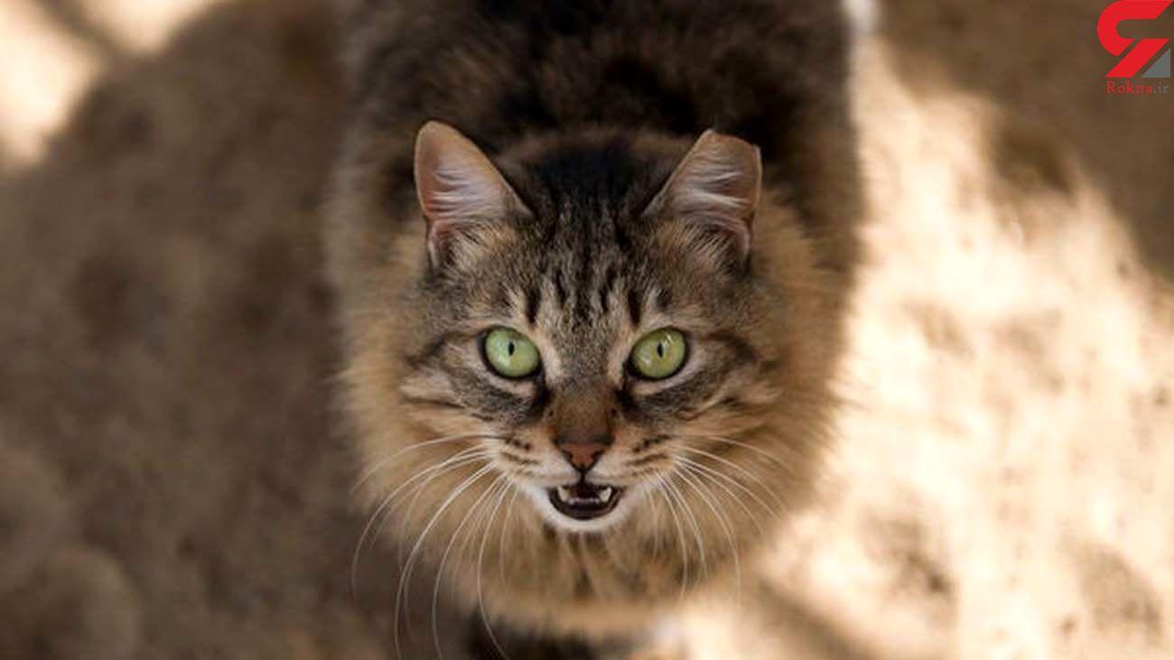 دانستنی های جالب درباره دنیای گربه ها