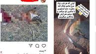 بازداشت یک مرد بخاطر انتشار عکس های وحشتناک / در ماکو صورت گرفت + عکس های تکاندهنده