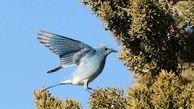 مرگ ناگهانی صدها هزار پرنده مهاجر دانشمندان را مبهوت کرد
