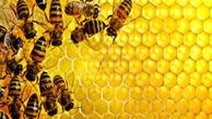 ایران سومین تولید کننده عسل جهان/ سرانه مصرف ایرانیها 3 برابر مردم دنیا